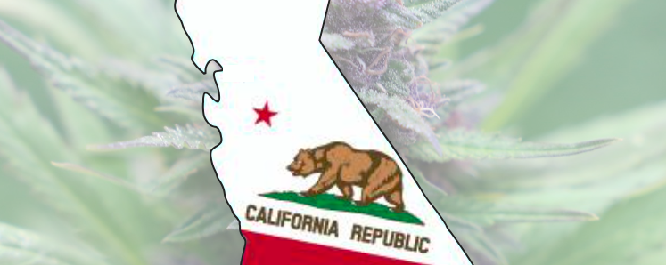 California Cannabis Laws and Regulation